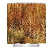 Panorama Winter Trees Color Shower Curtain