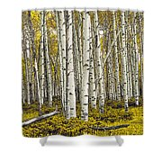 Panoramic Birch Tree Forest Shower Curtain