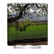 Panoramic Of Winter Lettuce Shower Curtain