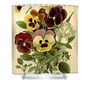 Pansies Shower Curtain by Philip Ralley