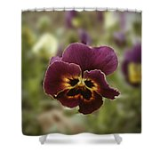 Pansy Beauty Photograph Shower Curtain