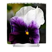 Pansy Breezes Shower Curtain