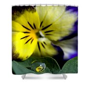 Pansy Close Up Shower Curtain