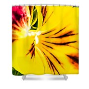 Pansy Flower 1 Shower Curtain