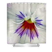Pansy Flower 11 Shower Curtain