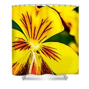 Pansy Flower 2 Shower Curtain