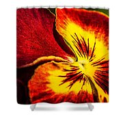 Pansy Flower 5 Shower Curtain
