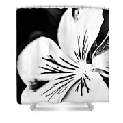 Pansy Flower Black And White 02 Shower Curtain