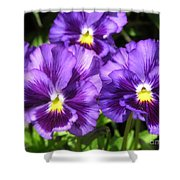 Pansy From The Chalon Supreme Primed Mix Shower Curtain