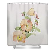 Pansy Hybrids Bambini Shower Curtain