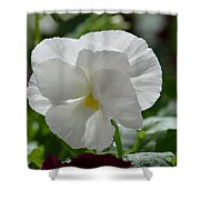 Pansy Purity Shower Curtain