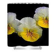 Pansy Trio Shower Curtain