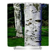 Paper Birch Trees Shower Curtain