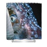 Paper Nautilus Port Phillip Bay Shower Curtain