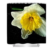 Paper White Daffodil Shower Curtain