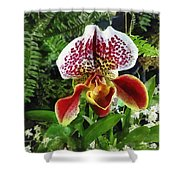 Paph Fiordland Sunset Orchid Shower Curtain