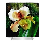 Paph Hellas Westonbirt Orchid Shower Curtain