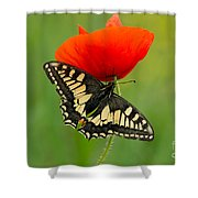 Papilio Machaon Butterfly Sitting On A Red Poppy Shower Curtain