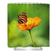 Papillon Shower Curtain by Darren Fisher