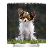 Papillon Dog Shower Curtain