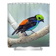 Paradise Tanager Shower Curtain