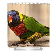 Parakeet With Treat Shower Curtain