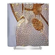 Parasitic Mites 501 Shower Curtain