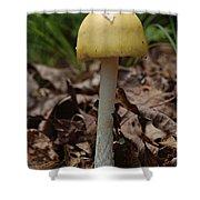 Parasol Mushroom Macrolepiota Sp Shower Curtain