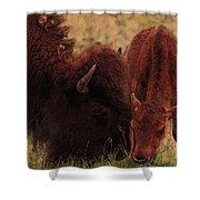 Parent With Newborn Calf Bison Shower Curtain