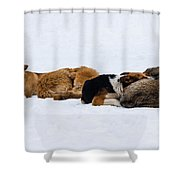 Pariah Dogs On The Snow - Featured 2 Shower Curtain