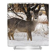 Parker Canyon 10 Shower Curtain