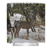 Parker Canyon 7 Shower Curtain