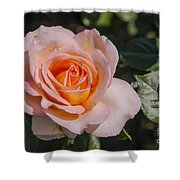 Parnell Pink Rose Shower Curtain