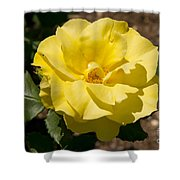 Parnell Yellow Rose Shower Curtain