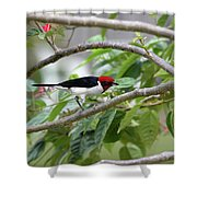 Paroare Rougecap Paroaria Gularis Shower Curtain