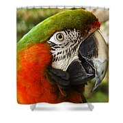 Parrot 26 Shower Curtain