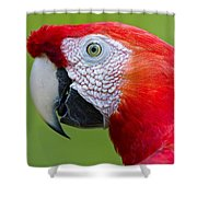 Parrot 35 Shower Curtain