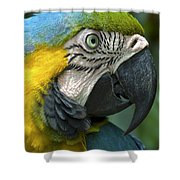 Parrot 9 Shower Curtain