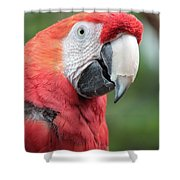Parrot Profile Shower Curtain