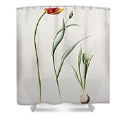 Parrot Tulip Shower Curtain by Iona Hordern