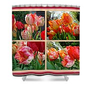 Parrot Tulips In Springtime Philadelphia Shower Curtain