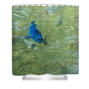 Parrotfish On A Swim Shower Curtain by John M Bailey