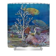 Parrots Of The Reef Shower Curtain