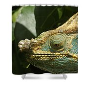 Parsons Chameleon From Madagascar 12 Shower Curtain
