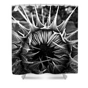 Partial Eclipse Of The Sunflower - Bw Shower Curtain