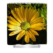 Partly Sunny Shower Curtain
