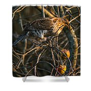 Partridge In An Apple Tree Shower Curtain