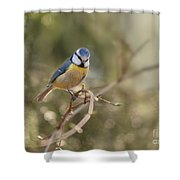 Parus Sitting On A Thin Branch Shower Curtain