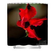 Paso Doble Fire Shower Curtain