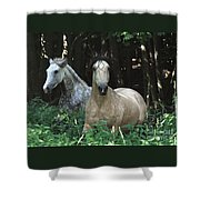 Paso Fino Mares Pay Attention Shower Curtain